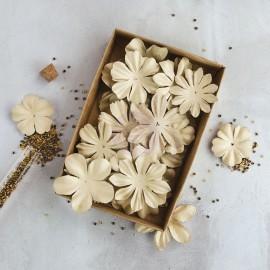 "Fiori Box Flowers ""Rodanthe II"""